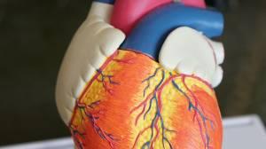 Defibrillator Monatliche Überprüfung