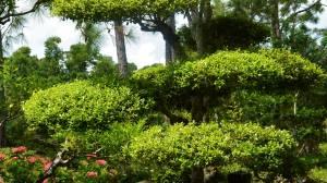 Horticulture - Site Risk Assessment